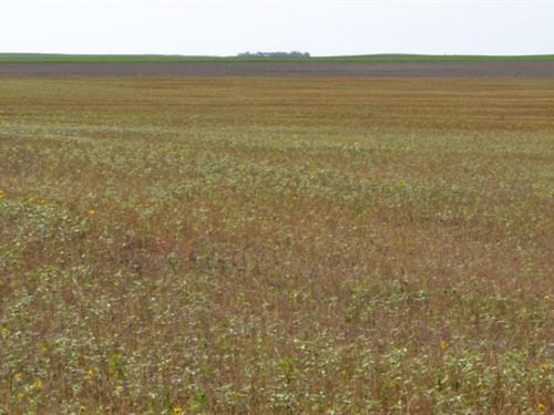 Manning Dryland : Dix : Kimball County : Nebraska