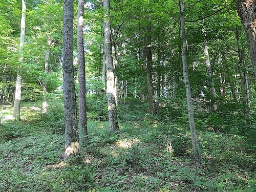 Mulberry Rd - 35 Acres : Mt Perry : Licking County : Ohio