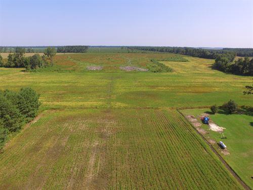 Mini Farm W/ Buildable Lot In Nc : Pinetown : Beaufort County : North Carolina