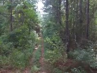Big Price Reduction, Beard MT Fore : Sacul : Nacogdoches County : Texas