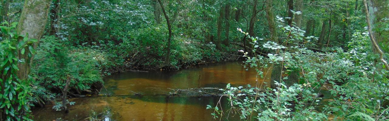 Big Timber, Big Creek, Improvements : Rupert : Taylor County : Georgia