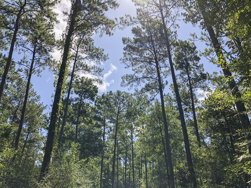 411 Acres Paces Creek : Corrigan : Polk County : Texas