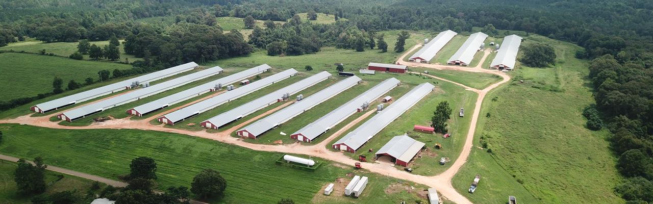 11 House Broiler Poultry Farm : McKenzie : Butler County : Alabama