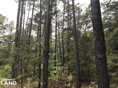 117 Acres Deer & Turkey Hunting : London : Pope County : Arkansas