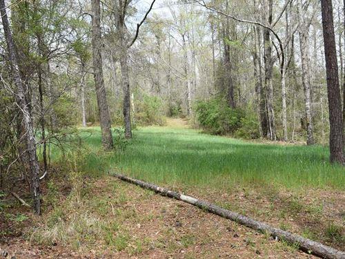 55-002N Ebenezer North Tract : Banks : Pike County : Alabama