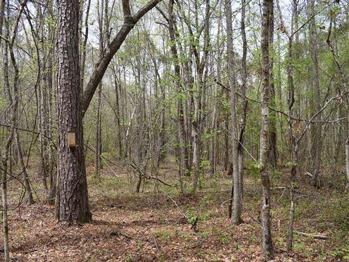 55-002S Ebenezer South Tract : Banks : Pike County : Alabama