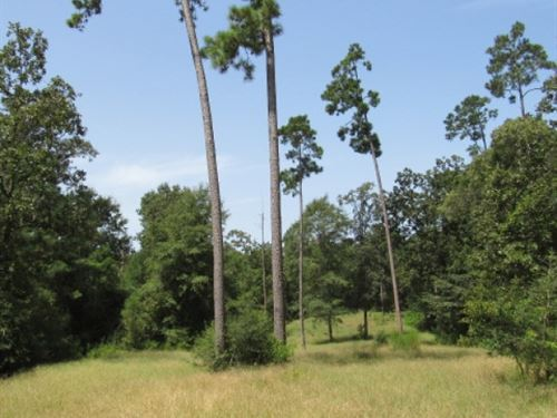 Pike 93 154 Acres : Osyka : Pike County : Mississippi