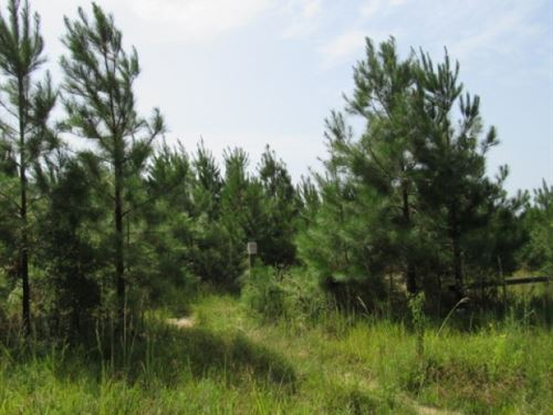 76 Acres On Pike 93 In Osyka, Ms : Osyka : Pike County : Mississippi