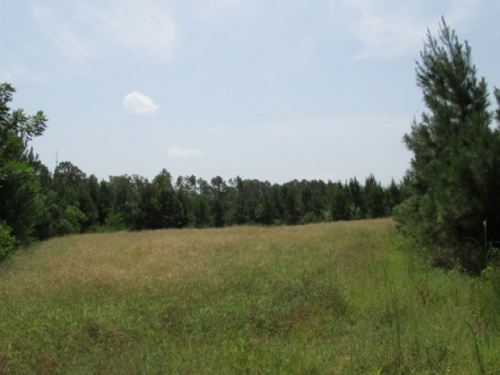 54 Acres Osyka, Ms : Osyka : Pike County : Mississippi