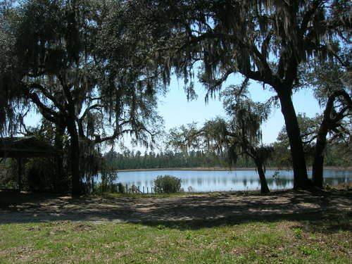 350 Acre Ranch : Melrose : Bradford County : Florida