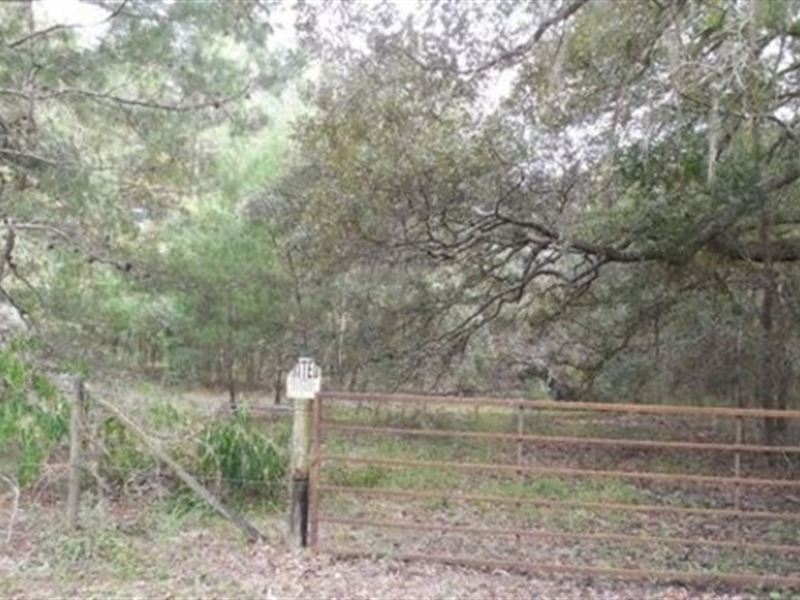 Owner Financing  A-445 : Ranch for Sale : Melrose : Alachua County : Florida