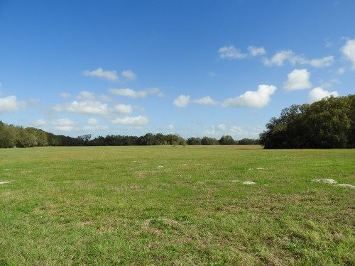 56 Acres Of Beautiful Pasture/Crop : Williston : Levy County : Florida