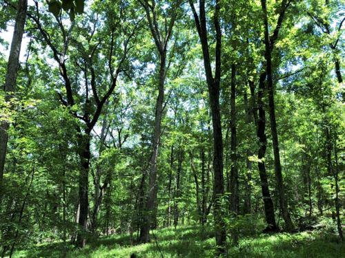 Reduced Again, Hunting Acreage By : Eatonton : Putnam County : Georgia