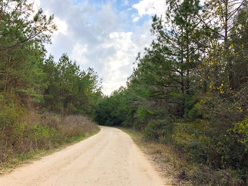 140 Ac Tom Marsh Road : Livingston : Polk County : Texas