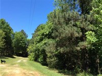 11.5 Wooded Acres Minutes From : Nacogdoches : Nacogdoches County : Texas