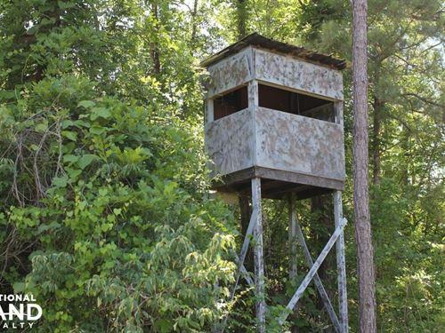 Sulligent Hunting And Timber Invest : Sulligent : Lamar County : Alabama