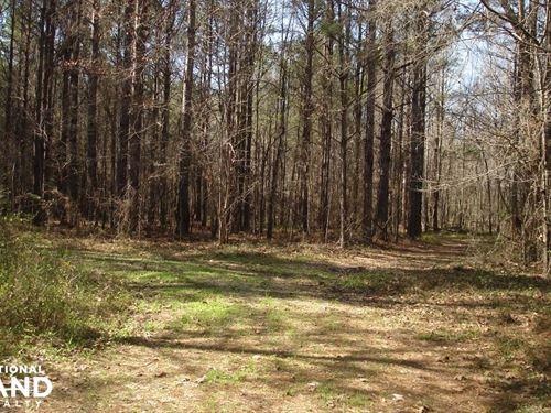 Black Warrior Hunting Tract : Sawyerville : Hale County : Alabama