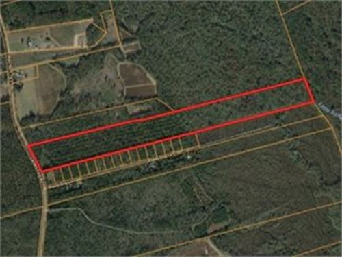 Timber, Creek Frontage, Homesite : Lodge : Colleton County : South Carolina