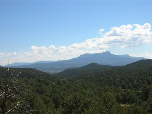 Remote Mountain Property Trinidad : Trinidad : Las Animas County : Colorado