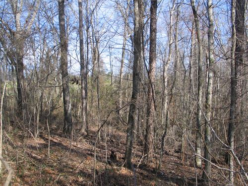 Hunting Property & Timber Investmen : Jasper : Cullman County : Alabama