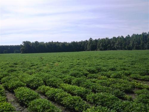 Cribbs Farm Parcel 1 : Brooklet : Bulloch County : Georgia