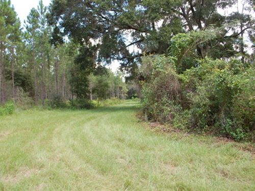 68.5 Acres, A-465 : Hawthorne : Alachua County : Florida