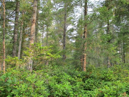 Trails Road Forestland : Belfair : Mason County : Washington