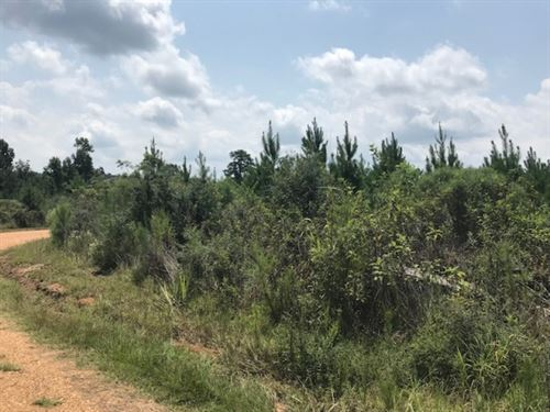68 Acres On Hartwell Road In Pike : Summit : Pike County : Mississippi