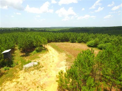 Several Food Plots Provide Plenty : Haleyville : Marion County : Alabama