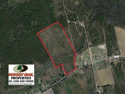 Reduced, 30 Acres of Prime Hu : Roper : Washington County : North Carolina