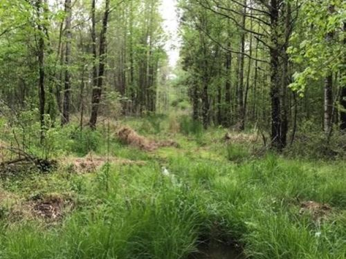 80 Acres In Webster County In Eupor : Eupora : Webster County : Mississippi