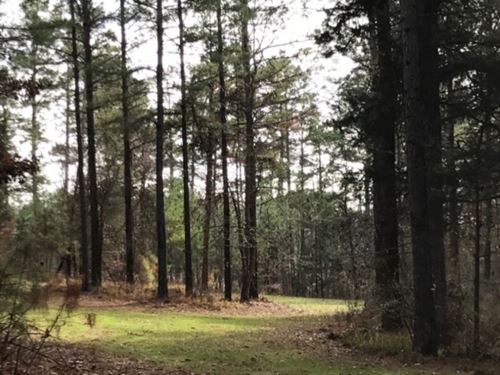44 Acres In Montgomery County, Ms : Winona : Montgomery County : Mississippi