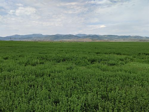 Working Farm In Chesterfield Idaho : Chesterfield : Bannock County : Idaho