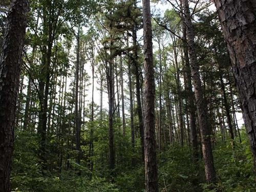 84 Acres With Pine Plantation For : Ava : Douglas County : Missouri