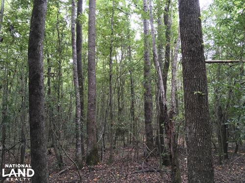 Boothtown And Earl Booth Road Tract : Citronelle : Mobile County : Alabama