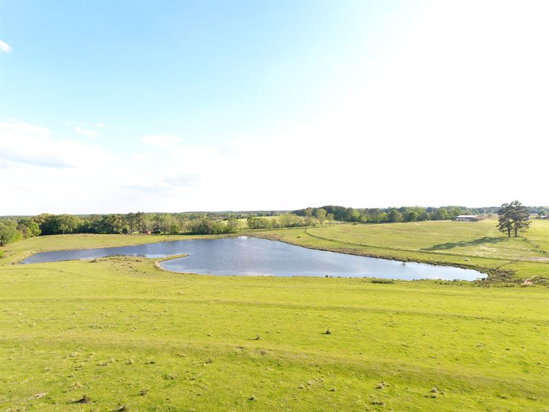 115 +/- Acres Pastureland With Pond : Samson : Geneva County : Alabama