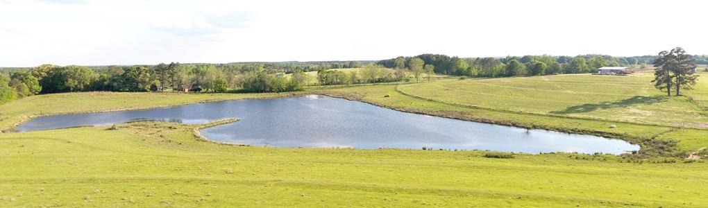 115 +/- Acres Pastureland With Pond : Samson : Geneva County : Alabama