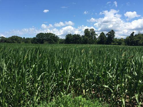 Land Auction - 87+/- Acres : Dowagiac : Cass County : Michigan