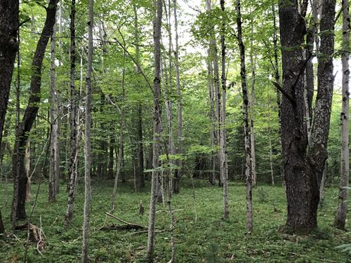 Forestport Area Adirondacks Ny : Forestport : Herkimer County : New York