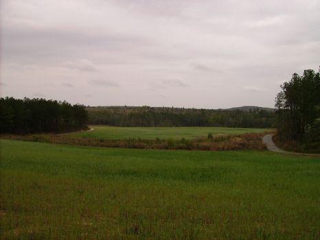 Deer Hunters Dream Under High Fence : Buena Vista : Marion County : Georgia