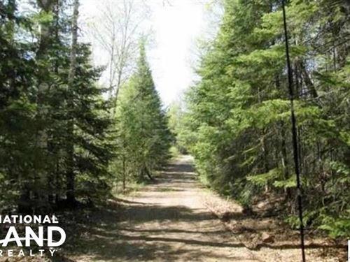 1, Hunting, Recreational, Woods : Finland : Lake County : Minnesota