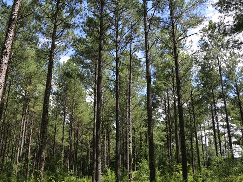 Farmland, Mature Timber, Hunting : Newville : Henry County : Alabama
