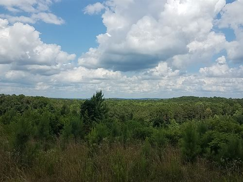 56+/- Wooded Acres Clay County, Al : Linevillle : Clay County : Alabama
