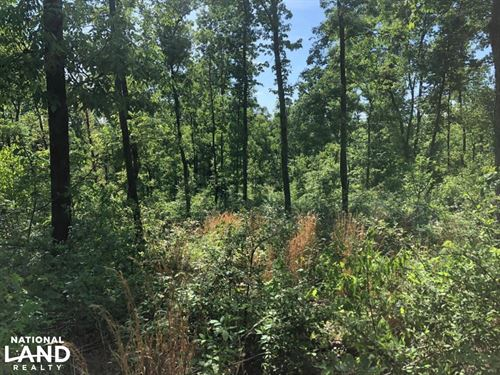 81 Acre Hunting Tract in Muhlenberg : Dunmor : Muhlenberg County : Kentucky