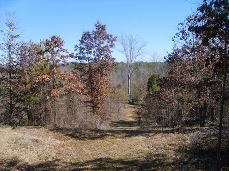 Hunting Land : Union : South Carolina