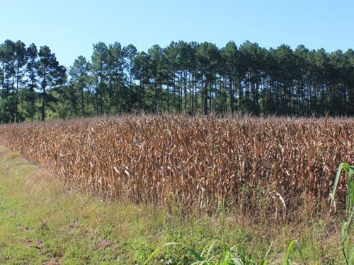 30 Acre Farm And Recreational Retre : Ridgeville : Berkeley County : South Carolina