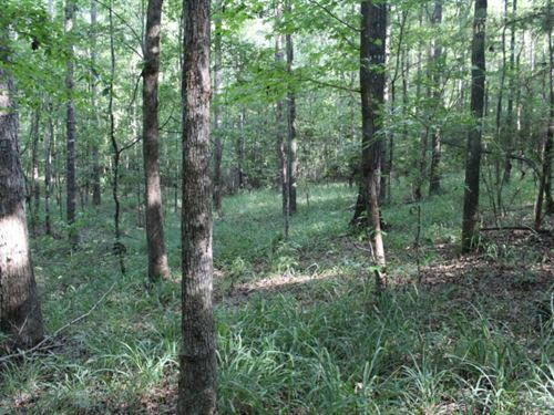 62 Acres In Covington County In Col : Collins : Covington County : Mississippi