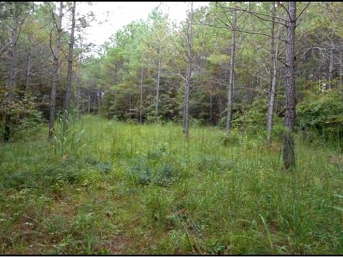 103.5 Acres In Lafayette County, Ms : Springdale : Lafayette County : Mississippi