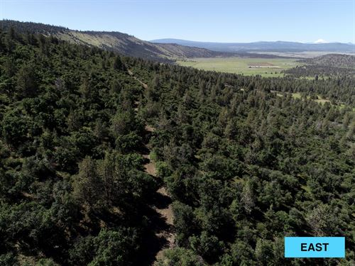 10 Acres In McArthur, CA : McArthur : Lassen County : California