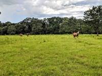 Pretty Mini-Farm For New Homesite : Blakely : Early County : Georgia